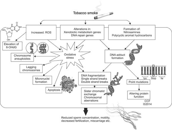 Heeft roken effect op de vruchtbaarheid van mannen?
