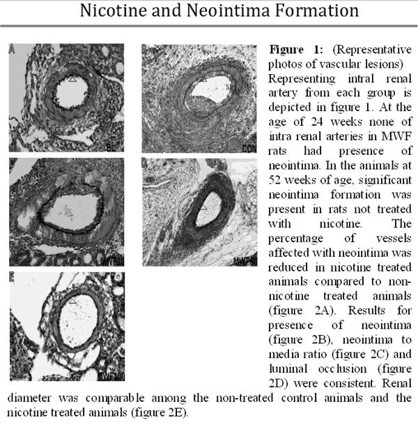 nicotine-nieren-bloedvaten